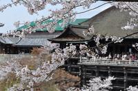 京都の桜名所めぐりと京都御所(4/9・11・12)