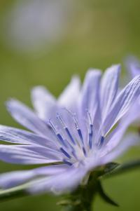 菜園の花や虫