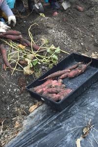 菜園でアウトドアライフ