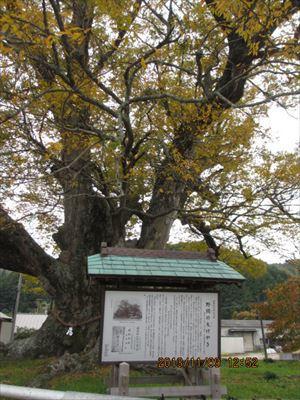 森の中の素敵なカフェ☆プルーンの木☆The tree of prune