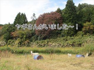 丹波地鶏☆農園食堂Aube☆&紅葉