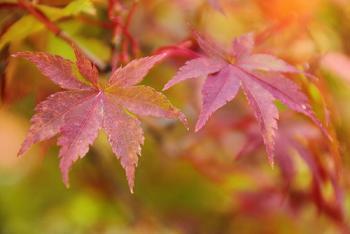 ほんのり紅葉!小さい秋を見つけました