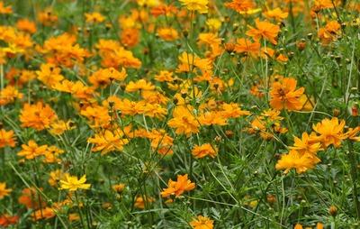 夏風テラスから夏の花八景。