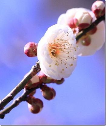 万博花鳥暦 1 (2012年2,3月)