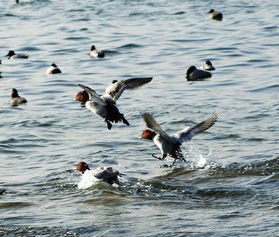 自然たんけん!冬の渡り鳥を見にいこう!