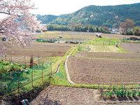 春の里山の自然に触れよう!