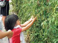 親子で楽しむ「農」の体験教室
