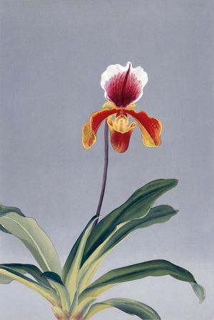 蘭にみた、夢 蘭花譜の誕生
