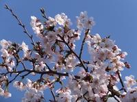 4月です、春です