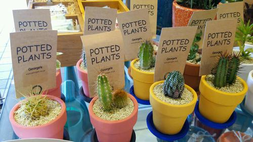 ◆POTTED PLANTS◆