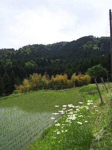 今年も田植えに行きました。
