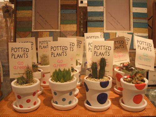 癒される植物♪