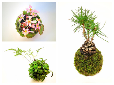◆ナチュラルライフフェスタ◆tito moss&flowers
