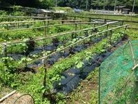 梅雨の晴れ間に畑を点検