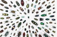 きらめく昆虫展