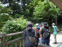 みのおこうえん昆虫クラブ 第二回目イベントは5月20日(日)~新緑の虫探し~
