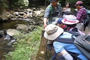滝道の昆虫探し