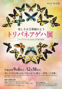 トリバネアゲハ展 ~世界三大美蝶~として知られるトリバネアゲハが箕面にやってくる!