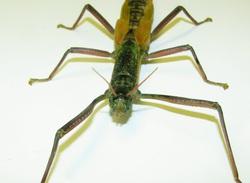 -終了しました- あなたにとどけ、亜熱帯!3月21日-5月末 企画展「八重山の昆虫たち」