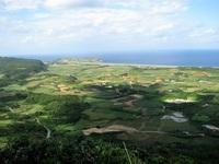-終了しました- ひと足お先に南の島へ!? 生体企画展示「八重山の昆虫たち」