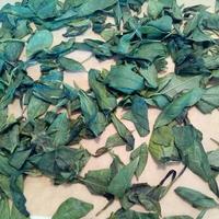 自家製緑茶に挑戦