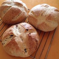今日のパン〜大豆の茹で汁酵母のカンパーニュ〜