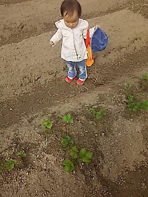 草取りの 畑作業に 祖母想う☆