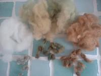 昨年収穫した綿の種♪