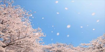 春を彩る・・・「マイキータ」