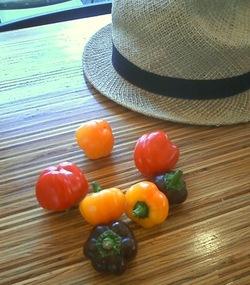 今日のお野菜さん♪