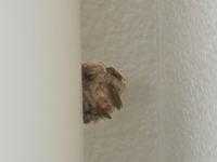 蜂の巣発見!