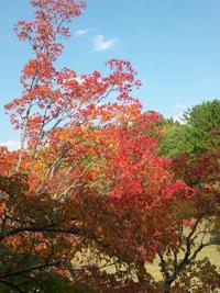 紅葉の季節が来ました♪
