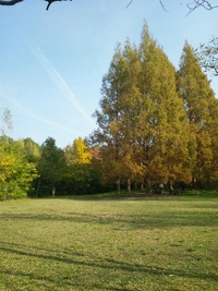 秋晴れの公園で…