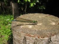 新緑の昆虫