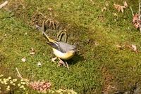 冬の滝道の鳥