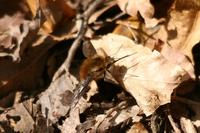 早春限定の昆虫たち