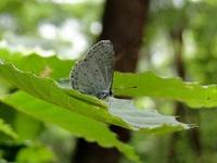 夏の昆虫(チョウの巻)