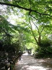 4月15日-5月31日 「明治の森箕面国定公園 新緑カーニバル」