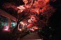 -終了しました-  瀧安寺・昆虫館前「紅葉ライトアップ」/ 瀧安寺前広場では野点がおこなわれます
