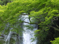 日本の滝100選 -箕面大滝(みのお おおたき)-へ
