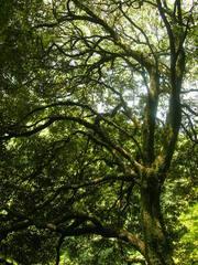 -終了しました- 7月16日おとなのための うめやしき寺子屋講座「はじめての写真教室-みのおの森たけんけん撮影会-」
