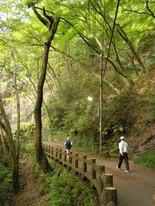 滝道を歩いて健やかに! 毎月第1日曜日 「まちやまウォーキング」