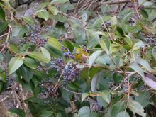 -終了しました- 1月22日 自然観察会1月-冬の野鳥と冬の果実を探そう!-