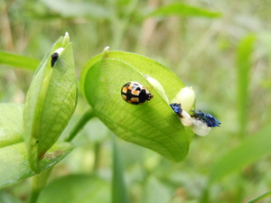 -終了しました- 【自然観察会】4月度 -春をいろどる花と虫たち-