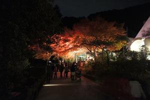 -終了しました- 晩秋の箕面公園、紅葉ライトアップ と 音楽ライブをお楽しみください!