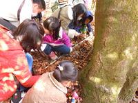 -終了しました- 12月11日 自然観察会-落葉のしたの生き物探索&昆虫館くるび館長のお話-