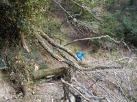 左岸(滝に向かって右側の山道)の倒木による通行止めは解除しました