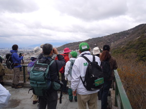 -終了しました- 箕面の山ヤマザクラ探訪ハイキング !