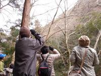 -終了しました- 自然観察会 1月24日「冬の野鳥観察」