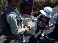 参加者募集中! 自然観察会10月-秋のいきものたち-